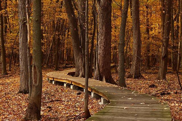 L'automne et ses couleurs magnifiques