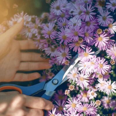 entretien des fleurs du jardin