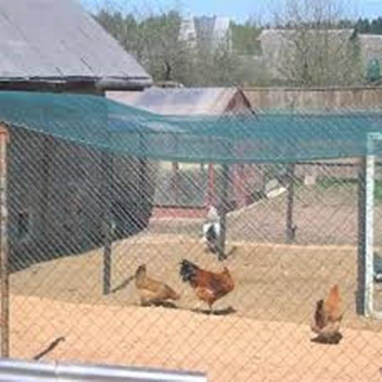 Poulailler protégé des oiseaux sauvages