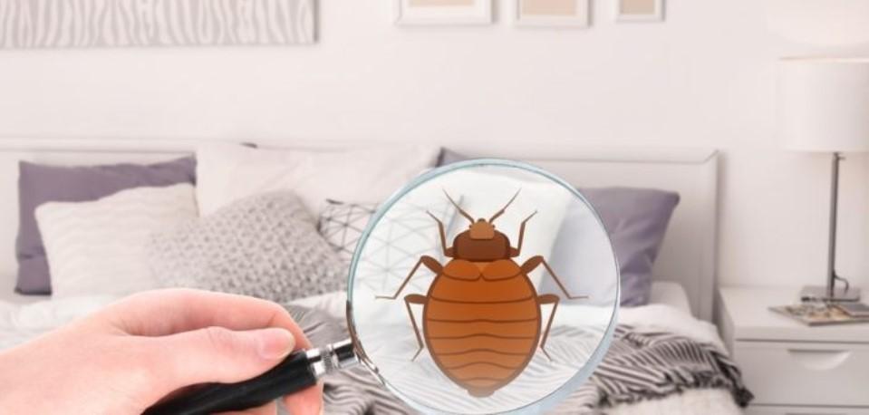 comment identifier la présence de punaises de lit
